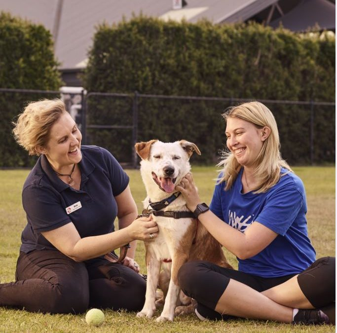 Paul Ramsay Foundation supports Happy Paws for more happy hearts across Australia